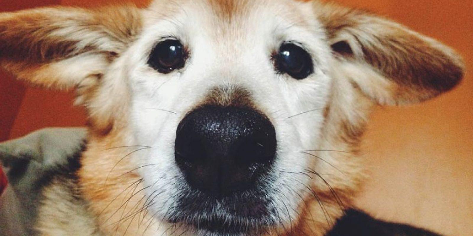 Esta foto ganó el consurso de Pet Selfie del consultorio de veterinario al que iba Chubby. Foto:Vía www.mariacsharp.com/blog