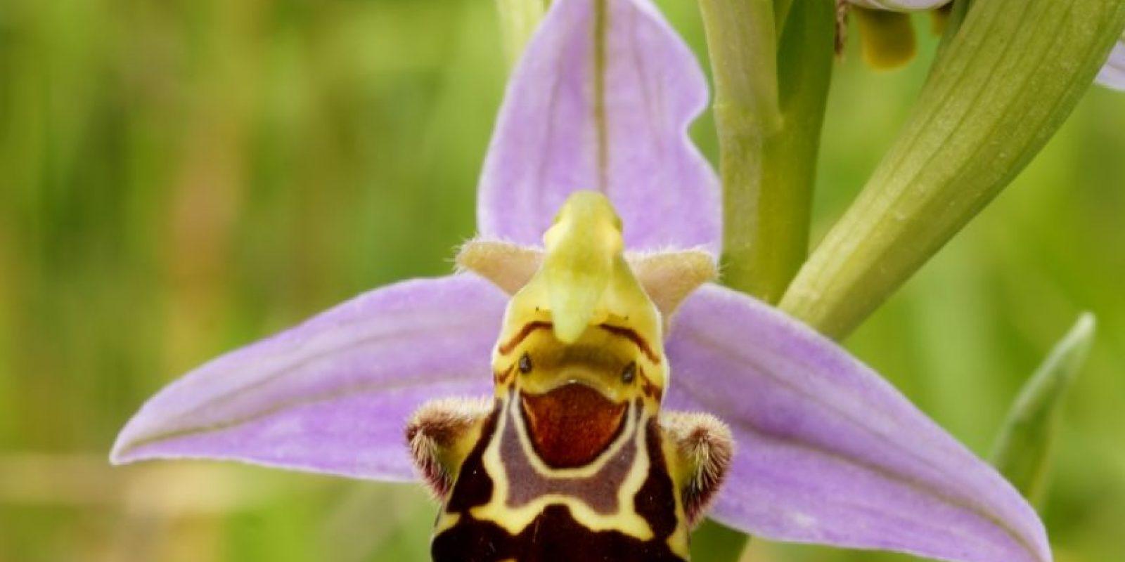 Se ve que la flor está muy alegre. Foto:Reproducción.