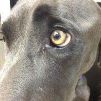 Alex es un perro que fue hallado en Nueva Orleans. Solo se alimentaba de rocas y hojas. Casi es sacrificado. Foto:Southern Animal Foundation