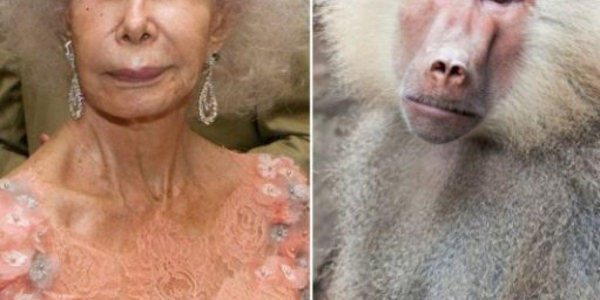 Fotos: Estos famosos se parecen mucho a estos animales