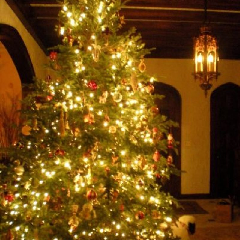 Los millonarios son capaces de pagar más de 20 mil dólares por un árbol perfecto cada Navidad. Foto:Wikimedia