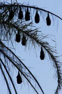 7. La mayoría de las especies de murciélagos utilizan la ecolocalización para encontrar a sus presas. Foto:Getty Images