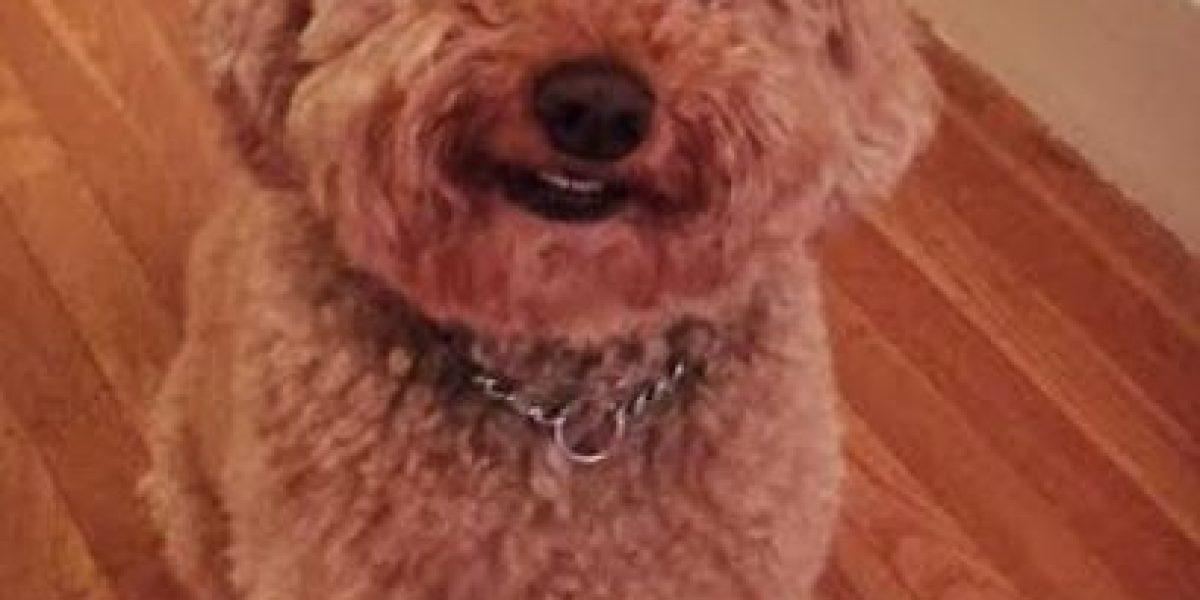 FOTO: Romeo, el perro de 10 años que conquistó a Internet con su sonrisa