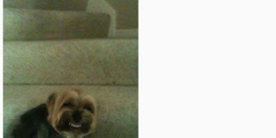 """Mi marica perro hace esta marica cara cada que llego a la casa. Todos los jodidos días, todos los jodidos días este marica perro se siente y hace este estúpido gesto"""", bromeó el dueño de este perro. Foto:Vía Reddit"""