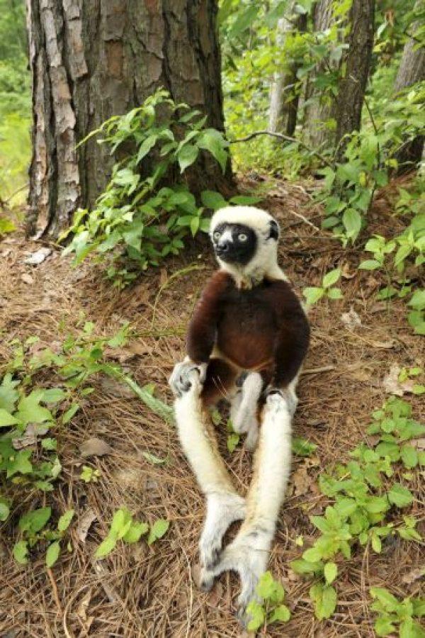 Foto: Facebook: Duke Lemur Center