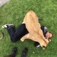 Admiten que tienen miedo de que los animales los ataquen. Foto:BlackJaguarWhiteTiger vía Instagram
