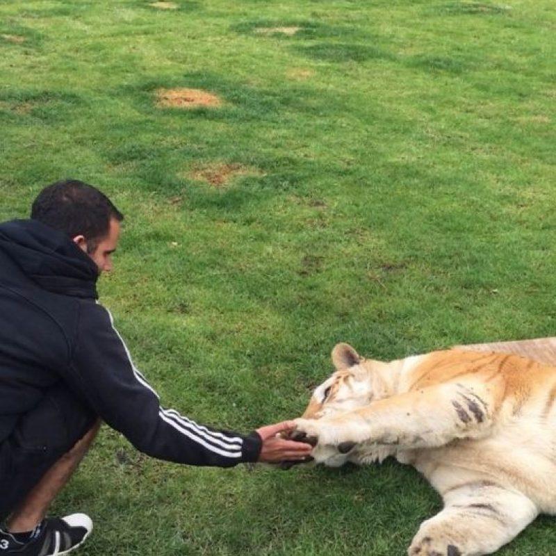 Este animal llegó de tamaño adulto, es por esto que Eduardo aún no se atreve a acercarse demasiado a él Foto: BlackJaguarWhiteTiger vía Instagram