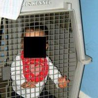 En una jaula para mascotas Foto:ReallySerious