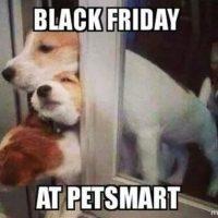 """""""Viernes negro, en la tienda de mascotas"""" Foto:Instagram"""