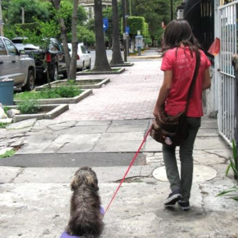 Foto:Tumblr.com/Tagged/perro-flojo