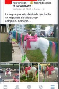 "Este ""pony"" Foto:Twitter"