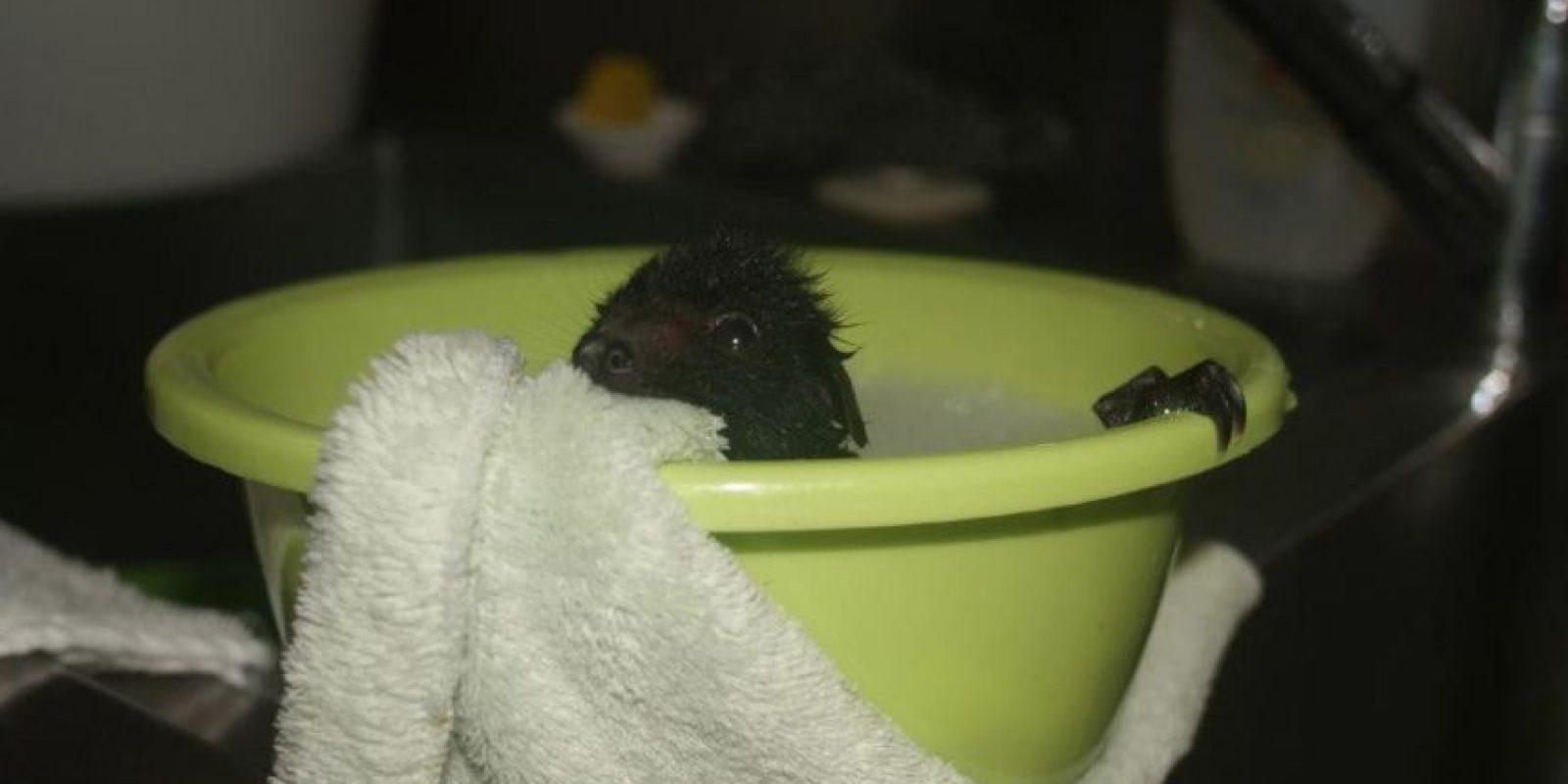 Necesitan baños Foto:Australian Bat Clinic