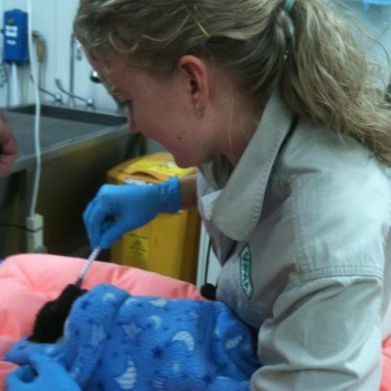 Y atención médica. Foto:Australian Bat Clinic