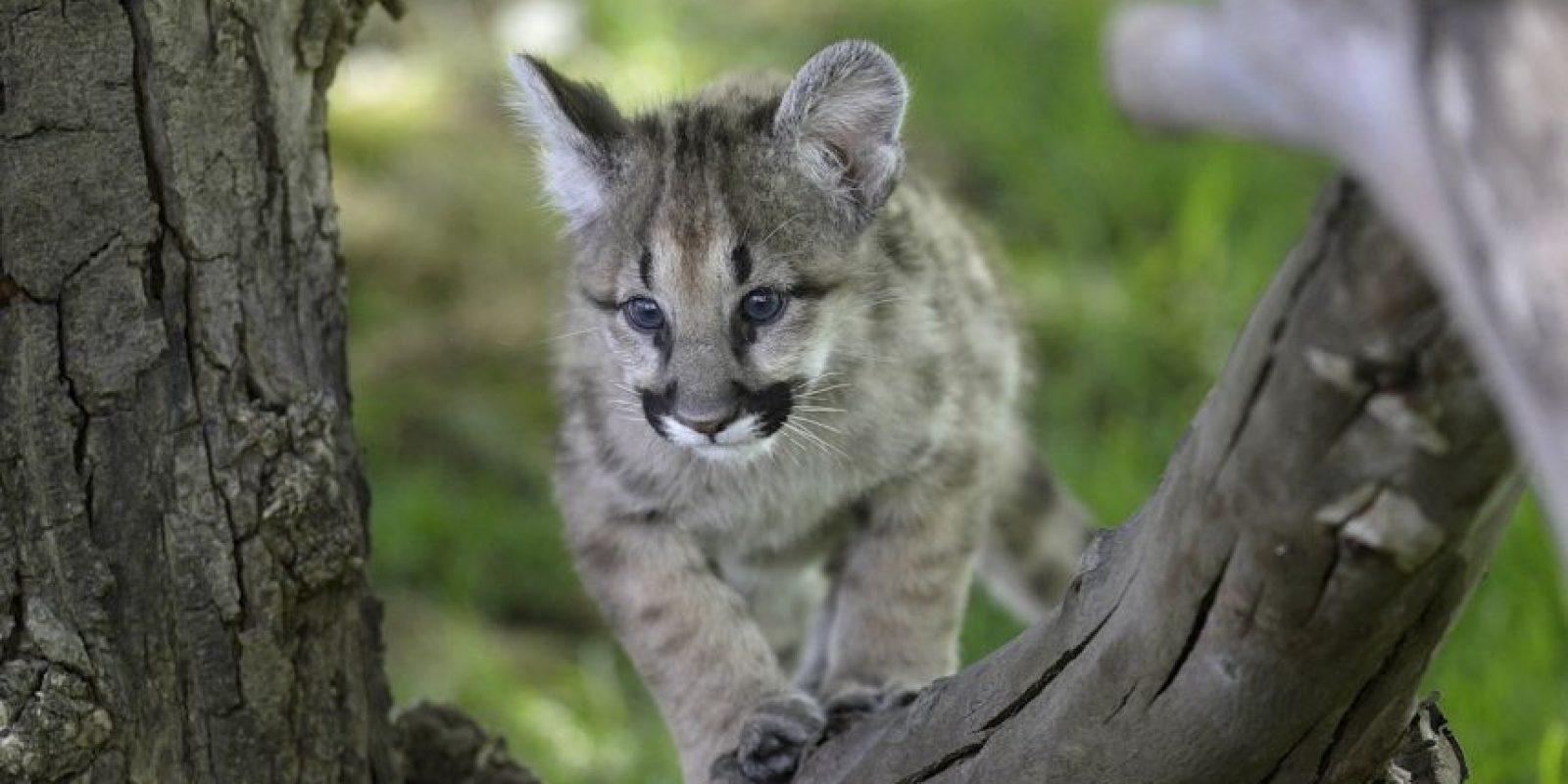 5. Los animales grandes representan un uno por ciento. Foto:Getty