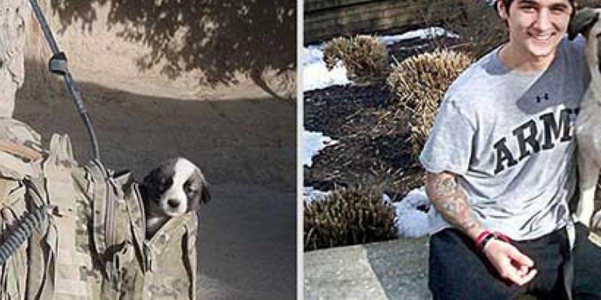 Galería: Estas adorables fotos muestran cómo han crecido estos cachorritos