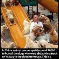 Pagó aproximadamente 8 mil dólares por salvar a estos perritos que eran llevados a la perrera. Esta foto fue tomada en su casa de rescate de animales. Foto:Vía Facebook.com/BoredomTherapy