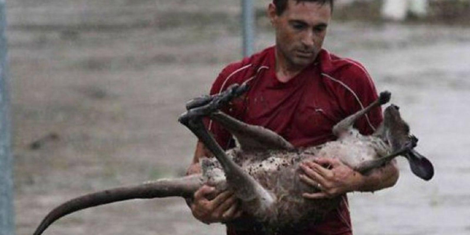 Salvando a un bebé canguro Foto:Vía Facebook.com/BoredomTherapy