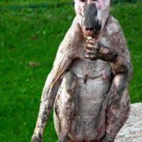 Mandril: este mandril hembra fue visto en su hábitat natural. Se cree que la causa de la calvicie es alopecia común.