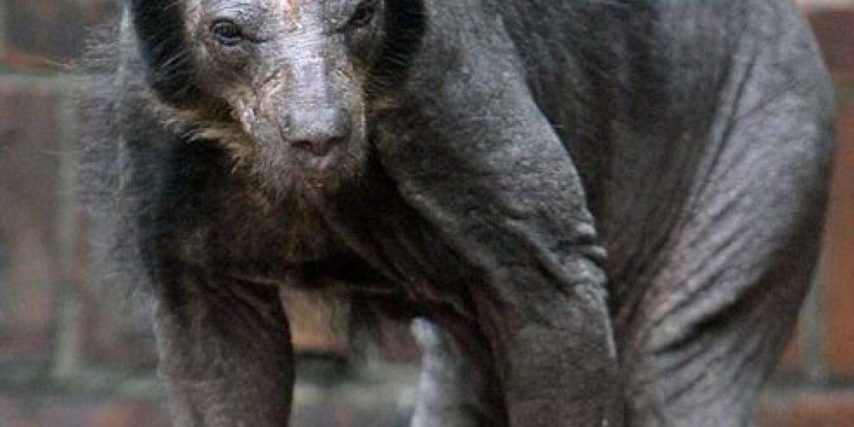 ¡Impresionante! Así se ven animales comunes y corrientes sin pelo