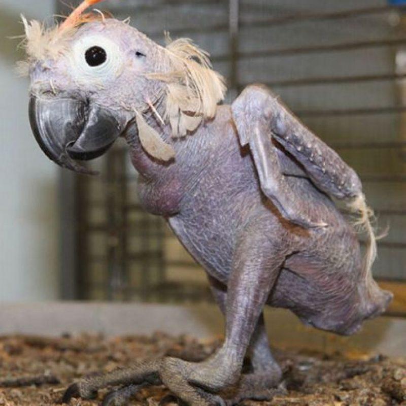 Loro: Óscar es un loro de 35 años de edad que sufre de una una enfermedad en el pico y las plumas que lo obligó a quitarse sus propias plumas porque le irritaban.
