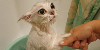 5. Para masturbarse, las mujeres necesitan una ducha. Eso es falso, totalmente. Foto:QuickMeme