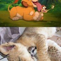 Simba y Timon.