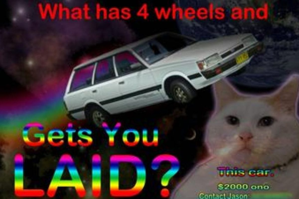 Un gato y letreros de arcoiris. Foto:Oddee
