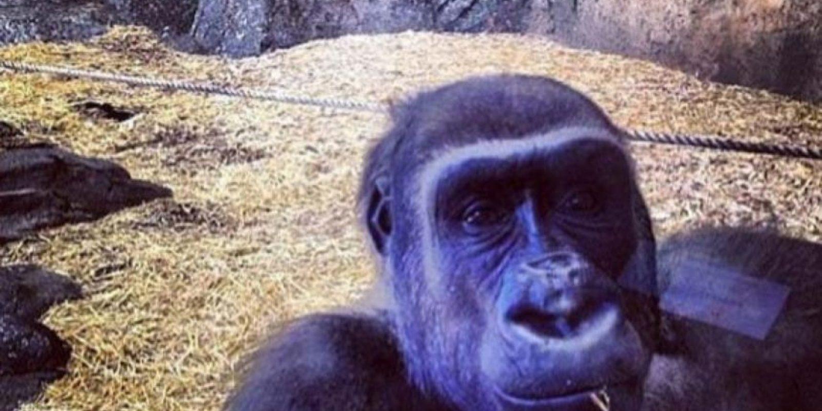 Saludos desde el zoo. Foto:HumorTrain