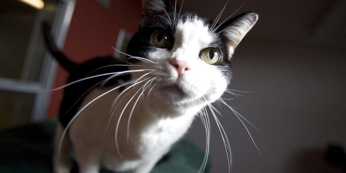 Gato que fue enterrado vivo salió de su tumba y regresó a su casa