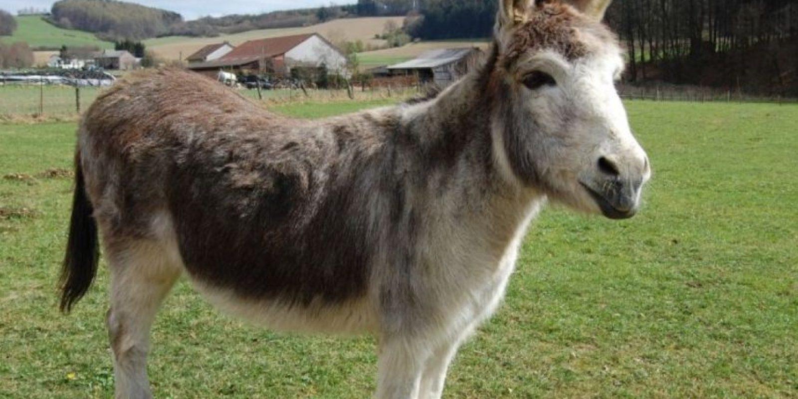 """""""Golpe del burro"""" (Donkey Punch) : Mientras una persona tiene sexo oral con la otra en la posición """"perrito"""", recibe un fuerte golpe en la cabeza. Foto:Wikipedia"""