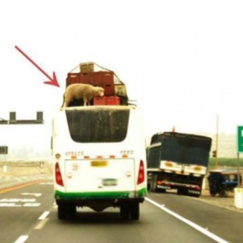 WTF! Foto: Tumblr.com/tagged/fail- transporte
