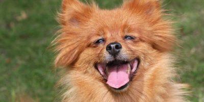 Cabe señalar que, al igual que en los seres humanos, una dieta saludable, la estimulación mental, el contacto humano y el ejercicio físico puede ayudar a prevenir el deterioro cognitivo en las mascotas. Foto:Pixabay