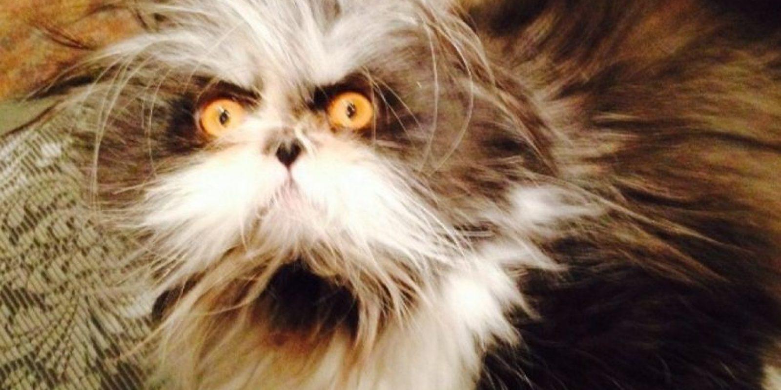 """Su nombre es una onomatopeya francesa de estornudo """"Atchoum"""" Foto:Vía Instagram: @atchoumfan"""