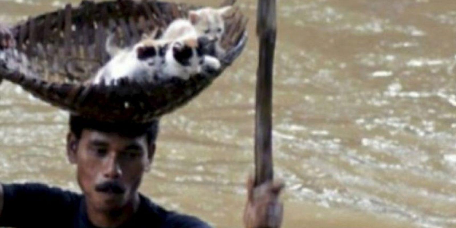 Este hombre rescata a unos gatitos de una inundación. Foto:AFP