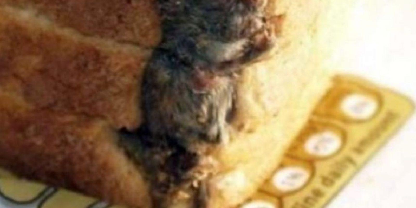 """Pero tal vez el """"parásito come lenguas"""" no sea lo peor. Pueden encontrar un ratón en el pan… Foto:Epic Fail"""