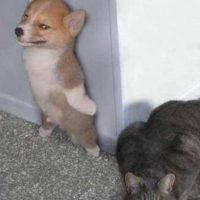Foto: Tumblr.com/Tagged-gatos-vs-perros
