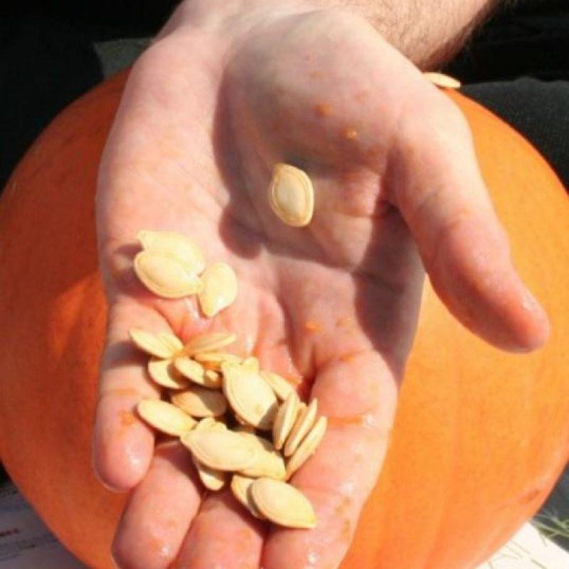 4. Semillas de calabaza Foto:Wikimedia