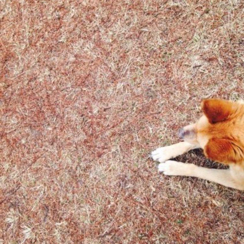 Actualmente se desconoce si ellos entienden el significado de algunos gestos. Foto:Tumblr.com/Tagged-perro