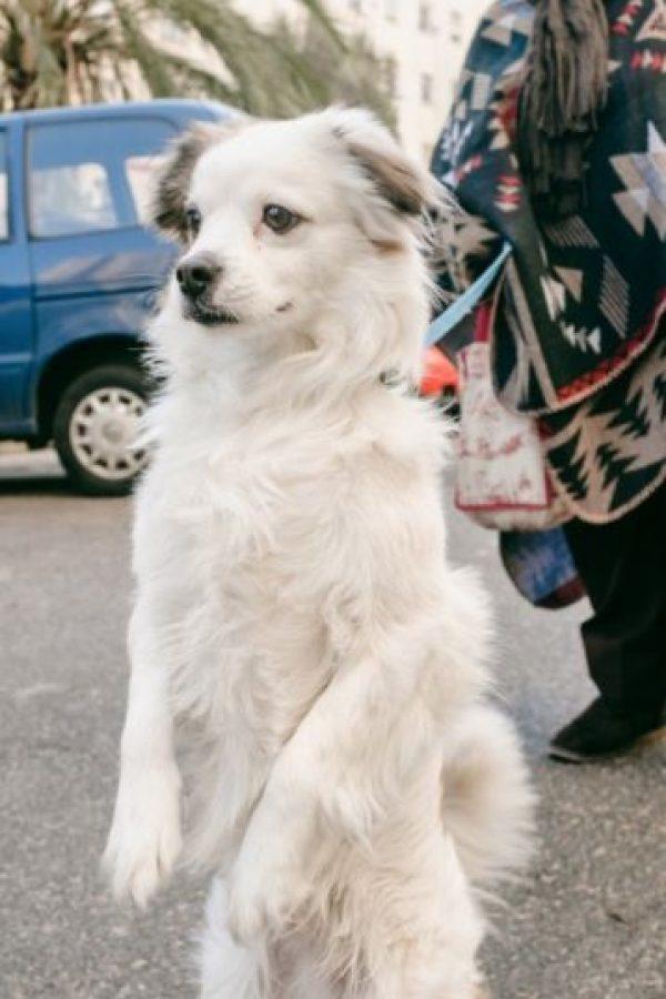 Es decir, los animales, seguramente en base a experiencias anteriores, ya tenían claro que es mejor mantener las distancias de las personas enojadas, explicó Huber. Foto:Tumblr.com/Tagged-perro