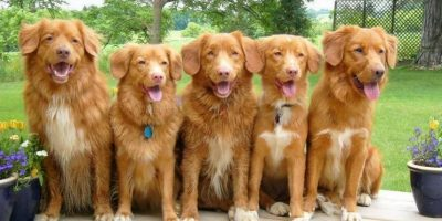 Amor por los perros