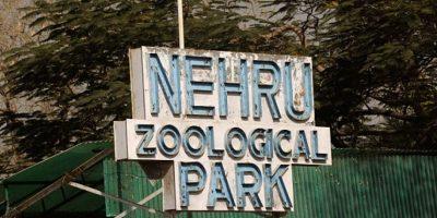 El hecho ocurrió en este zoológico. Foto:dailymail.co.uk
