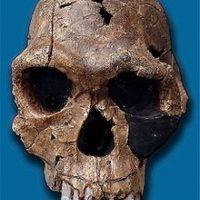 Homo Habilis: Fue descubierto en Tanzania entre 1962 y 1964. Era capaz de realizar instrumentos de piedra Foto:Wikimedia