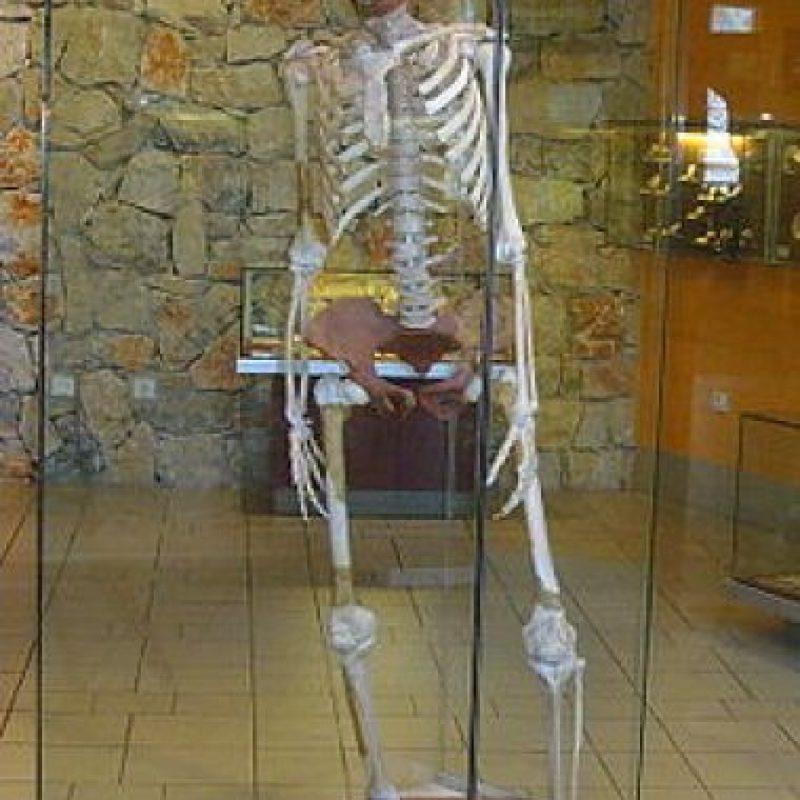 Homo Erectus: Después de más de 50 años, en 1940 recibió la categoría de Homo. Probablemente dominaba el fuego. Foto:Wikimedia