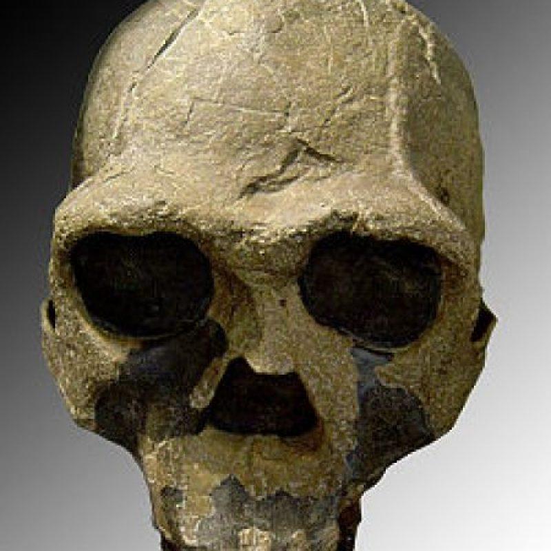 Homo Ergaster: Se descubrió en 1975 también en Kenia. Tiene un cráneo menos robusto y pudo ser el primero con capacidad para articular un lenguaje Foto:Wikimedia