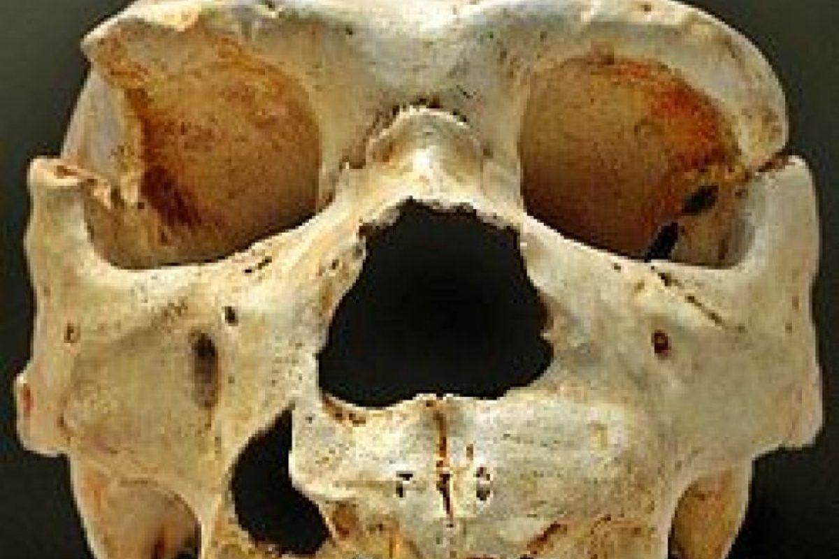 Homo Heidelbergensis: Se le descubrió cerca de Alemania en 1907. Es la primera especie humana en la que es posible detectar indicios de una mentalidad más desarrollada Foto:Wikimedia