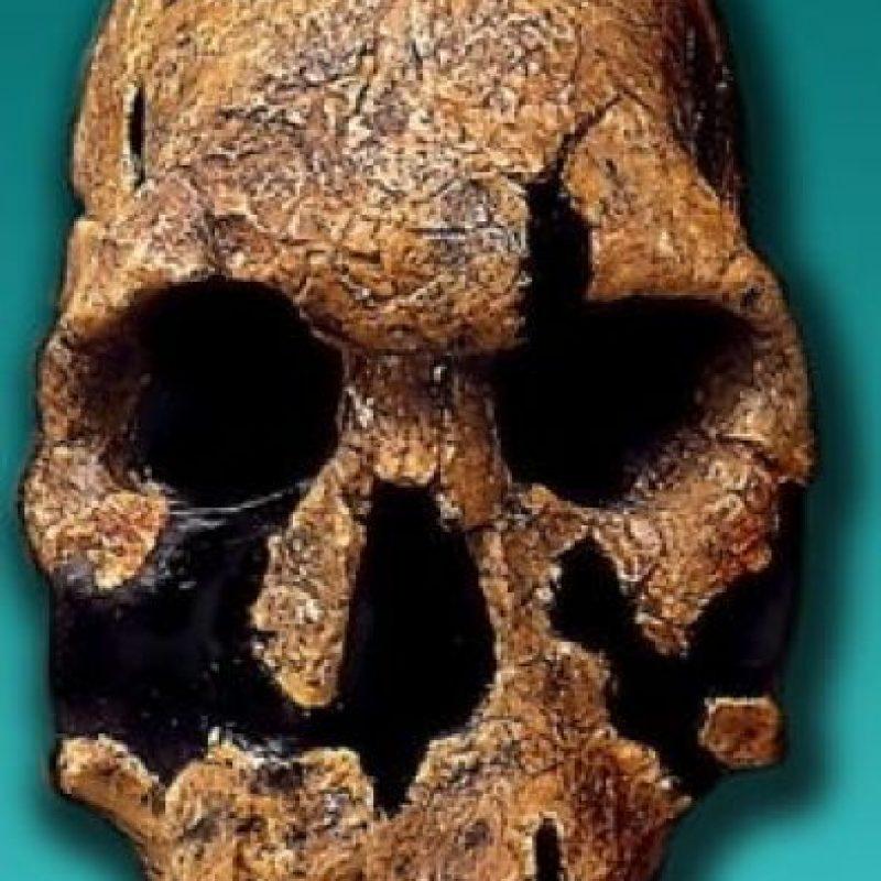 Homo Rodulfensis: Se descubrió en 1986 en Kenia y se distingue por la forma de la cara y sus medidas craneales. Foto:Wikimedia