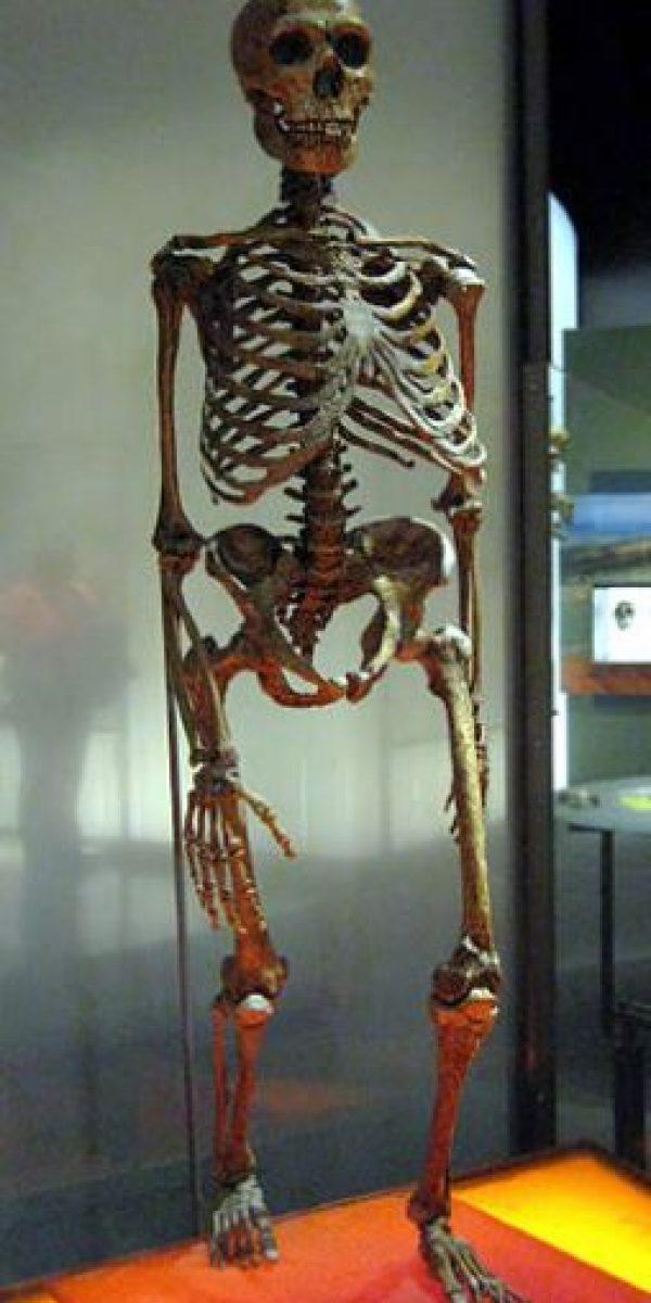 Homo Neanderthalensis: Fue propuesto en 1863. La comparación de su genoma es similar al nuestro. Se cree que poseía un lenguaje hablado. Foto:Wikimedia