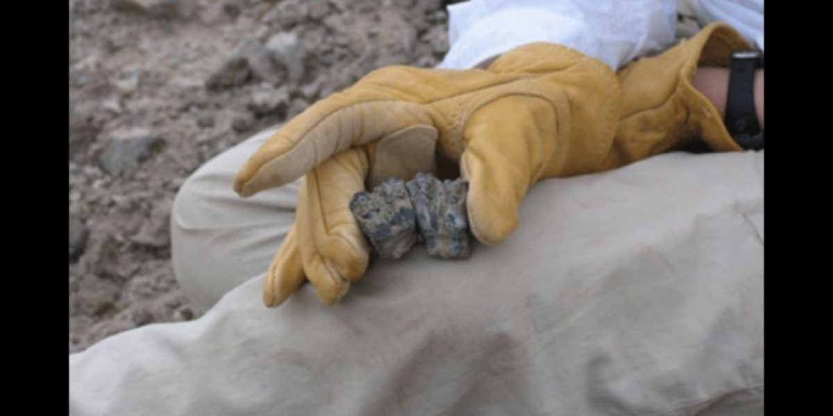 ¡Atención! Encuentran fósil del primer ser humano de la Historia
