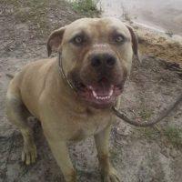 El perrito fue sacrificado luego del incidente. Foto:Youtube/Brenda Rigdon
