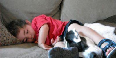 Los pitbull son más inestables que otros perros. No es cierto. Tienen el mismo estrés que los demás. Foto:Flickr